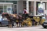 Horse transport in Vienna